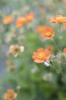 花の名前が入ります